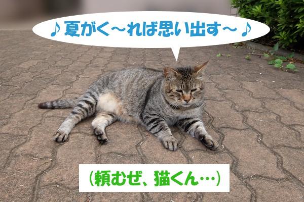 ♪夏がく~れば思い出す~♪ (頼むぜ、猫くん…)