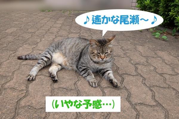 ♪遙かな尾瀬~♪ (いやな予感…)