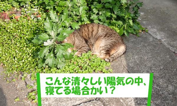 こんな清々しい陽気の中、寝てる場合かい?