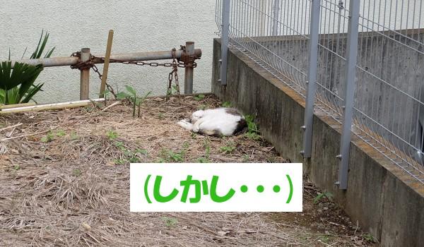 (しかし…)