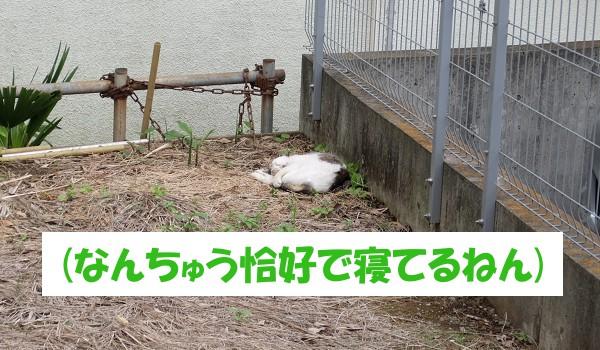 (なんちゅう恰好で寝てるねん)