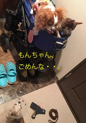 20160718 (14)