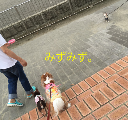 20160719 (23)