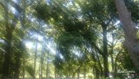 2016 木場公園1