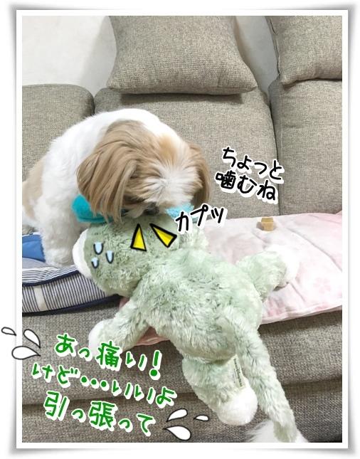 IMG_0528_1.jpg