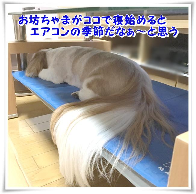 IMG_0581_1.jpg