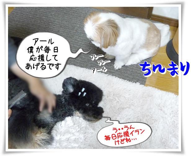 P1140002_1.jpg