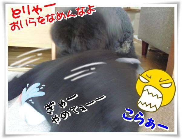 P1140128_1.jpg