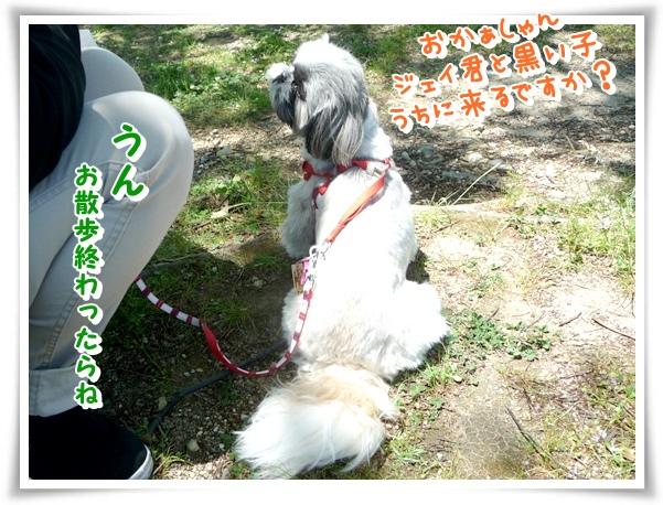 P1140279_1.jpg