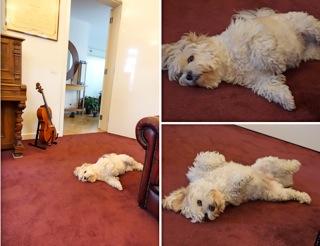 cello5_20160701203224b2d.jpg