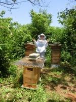 夏本番目前の養蜂場