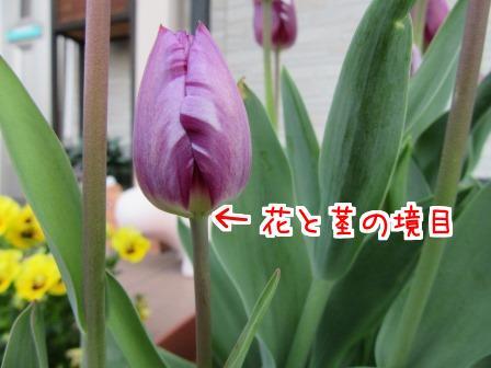 pjuNmHyt51ToYxF1460780629_1460780715.jpg