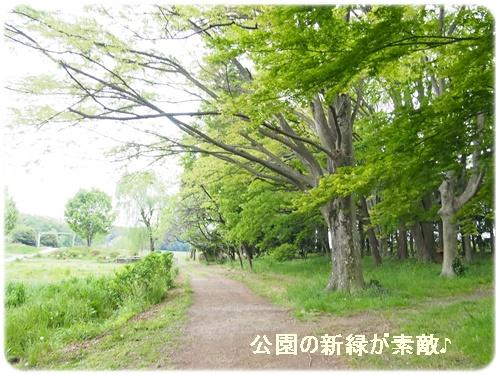 公園の新緑