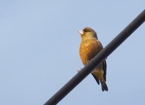 bird006
