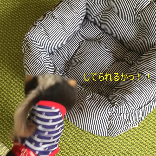 160719_1_6.jpg