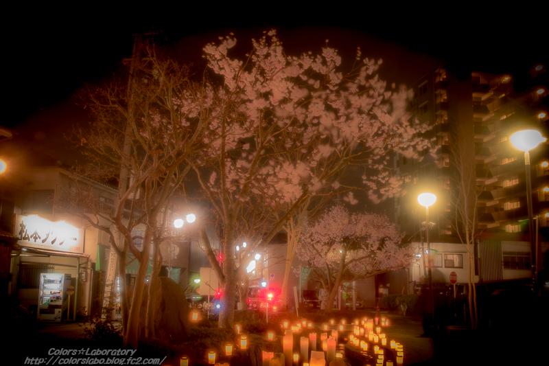 2016 4月1日 辰巳の御庭 3-3565
