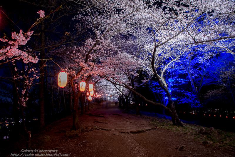 2016 4月8日 弘法山夜桜 1