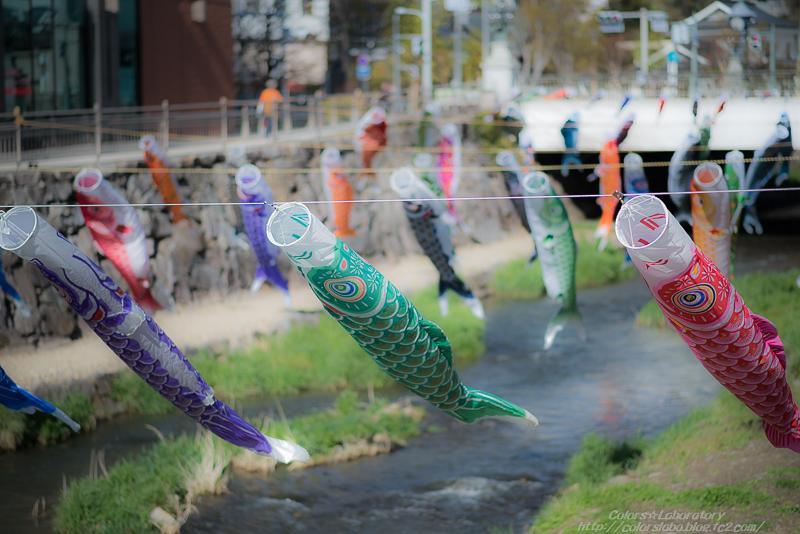 2016 4月14日 鯉のぼり 2-1