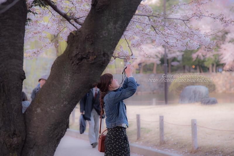 2016 4月5日 それぞれの桜 1