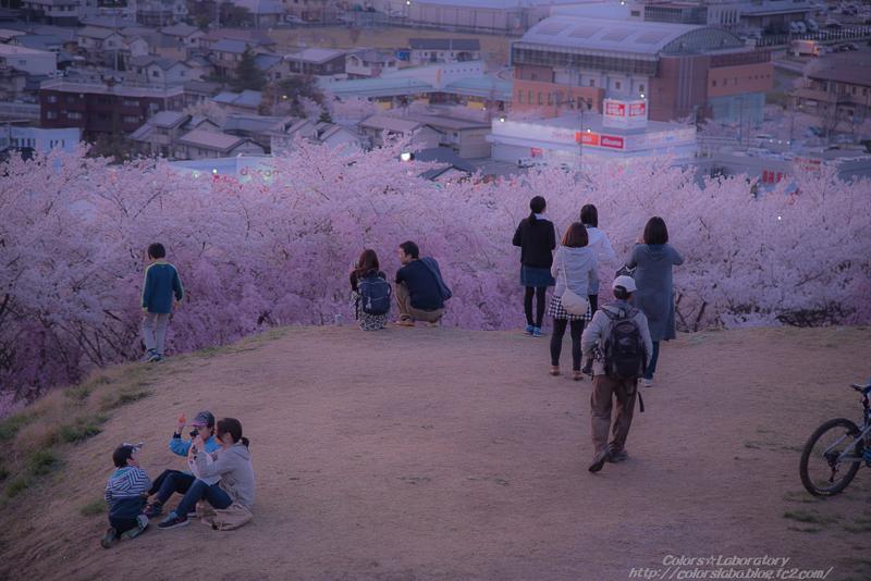 2016 4月5日 それぞれの桜 3