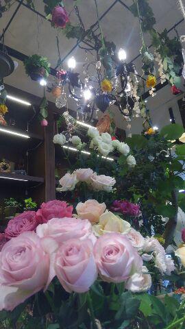 プチコノカビエラ塚口店6バラフェア