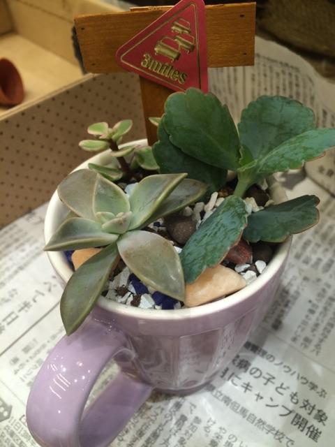 プチコノカビエラ塚口店5