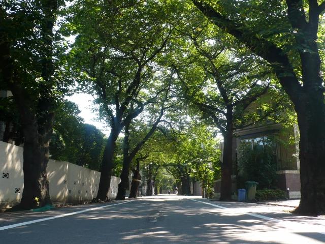 上北沢桜並木