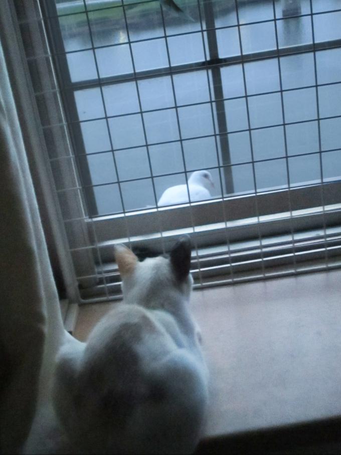 Cat_attack.jpg