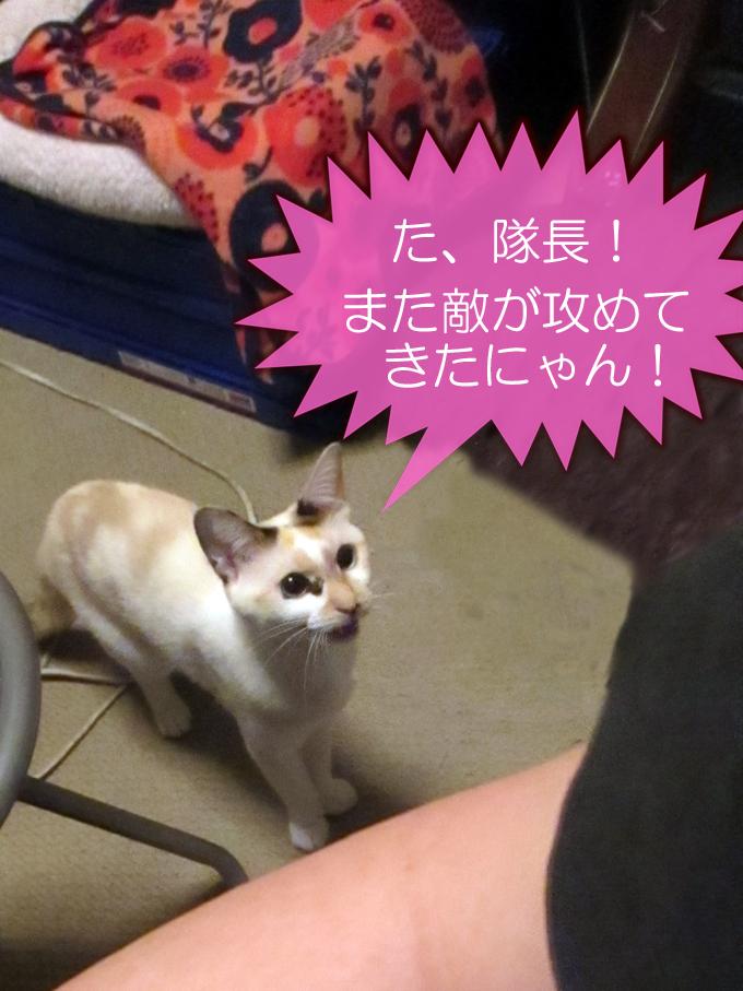 cat_advising.jpg