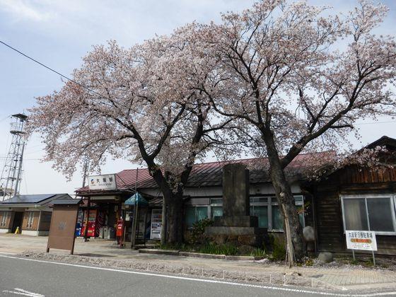立派な桜の木が植わる大屋駅