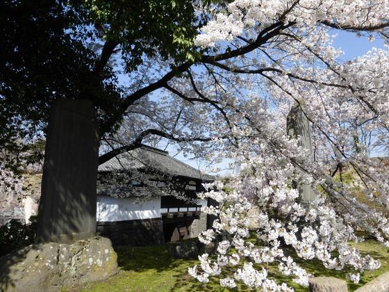 三の門の前に咲き乱れる桜模様も見逃せない