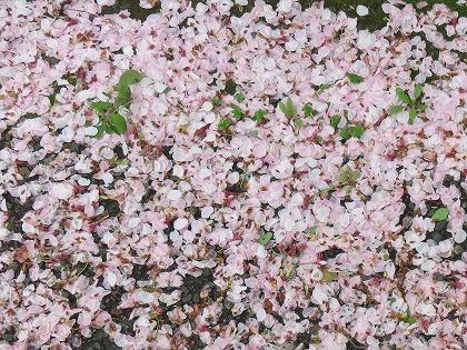 春の嵐の後で (3)