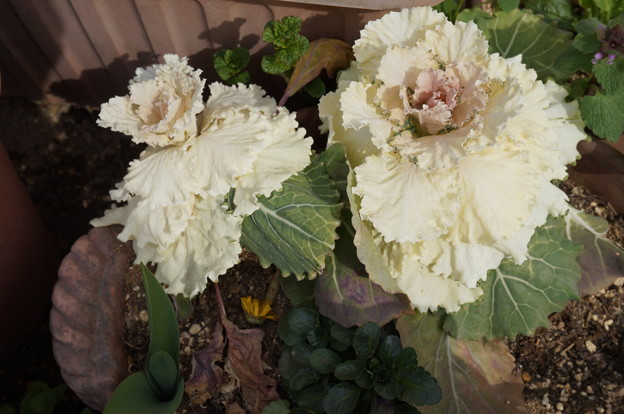 実家の花7
