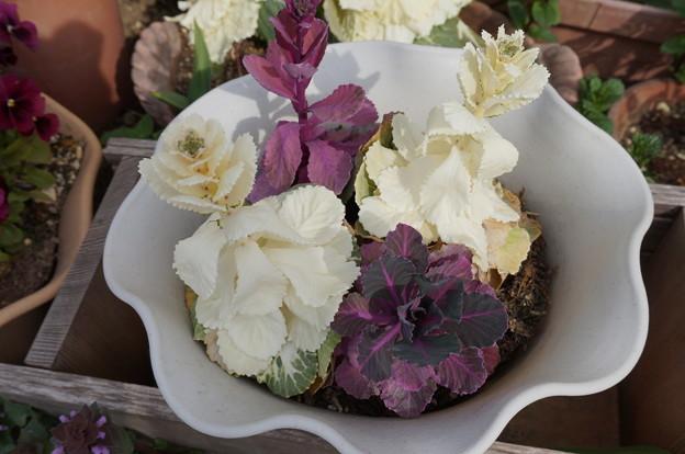 実家の花8