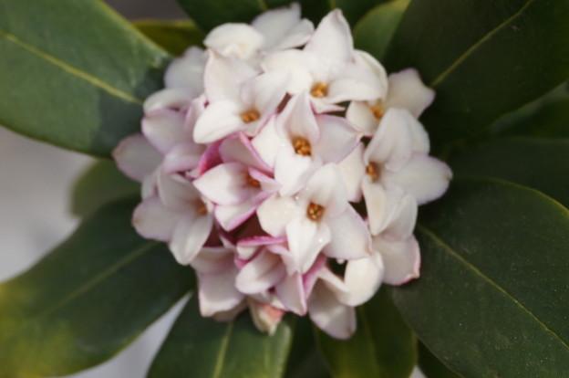 実家の花15