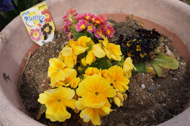 実家の花18