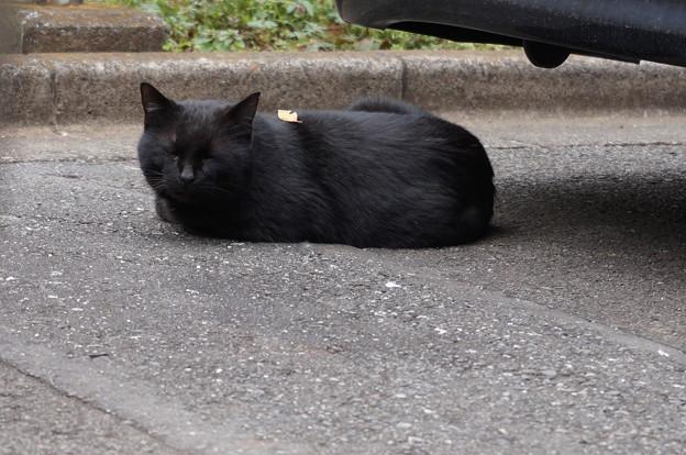 毎月遭遇する黒猫さん