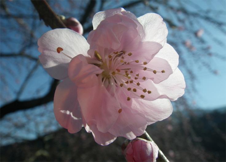 ピンクの可愛いい花_edited-1