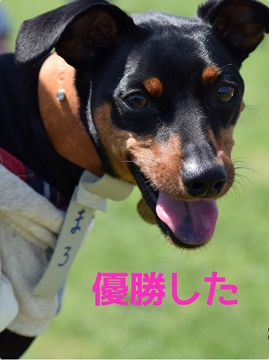 s-ミニピン滋賀③ (8)