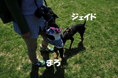 s-滋賀ミニピン会② (1)