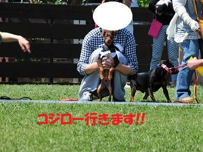 s-滋賀ミニピン会② (6)