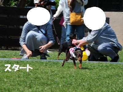 s-滋賀ミニピン会② (7)