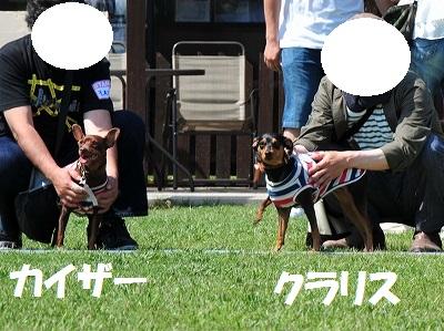 s-滋賀ミニピン会② (14)