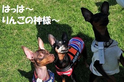 s-滋賀ミニピン会② (34)
