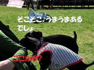 s-滋賀ミニピン会② (35)