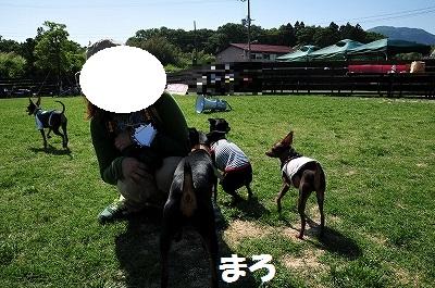 s-滋賀ミニピン会② (36)