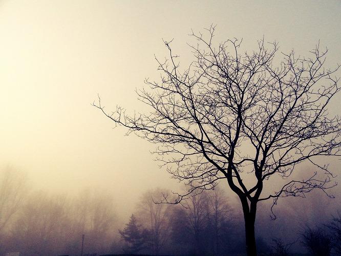 霧3491
