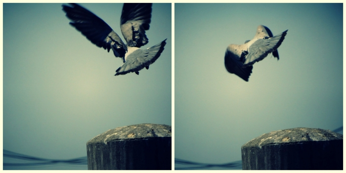 PicMonkey Collage (1) (1)