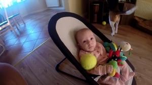 【その他】赤ちゃんからオモチャを奪って泣かせてしまったビーグル犬・・・