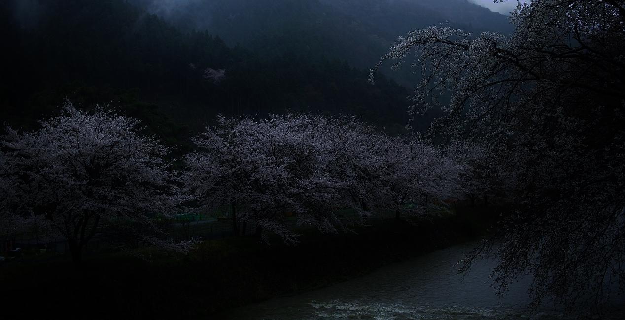 X054 - コピー高瀬川桜